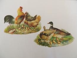 2 Découpis Basse Cour Coq Poule Et Poussin - Canard  -chromo -  1J1 - Découpis