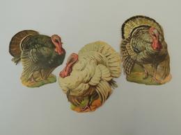 3 Découpis Dindes Animaux De Basse Cour - Thanksgiving -chromo -  1J3 - Découpis