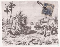 FAUX, Cuba, Plantación - Erinofilia