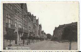 Sint-Truiden - Saint-Trond - Prins Albrechtlaan - Avenue Prince Albert - 1950 - Sint-Truiden