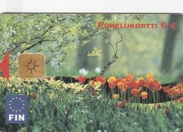 Finland - Tulppaanit - Tulips - Finland