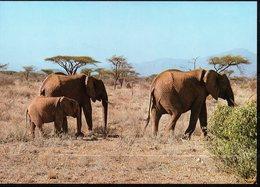 CP -WWF - Eléphant D'Afrique - Elephants