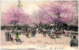 YOKOHAMA - Cherry Blossom, Yokohama Park - Yokohama