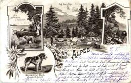 Souvenir Des Alpes - Litho - Gruss Aus.../ Grüsse Aus...