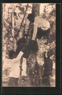 AK Timor, Junge Einheimische Beid Er Ernte - Ansichtskarten