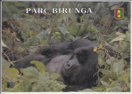 RWANDA RUANDA  PARC BIRUNGA GORILLE DE MONTAGNE; MOUNTAIN GORILLE  USED NICE STAMP - Rwanda