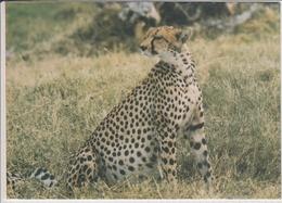 KENYA CHEETAH OR HUNTING LEOPARD BIG CAT  NICE STAMP BUTTERFLY - Kenya