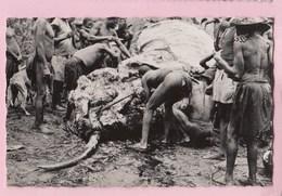 CONGO BRAZZZAVILLE Chasse Dépeçage D'un éléphant - Congo Français - Autres