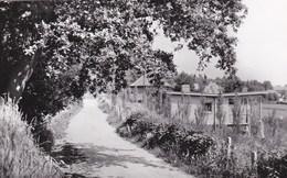 Mont-de-l'Enclus - Avenue Albert - Kluisberg - Albertlaan - Mont-de-l'Enclus