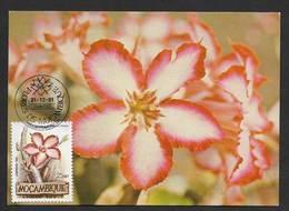 Mozambique Fleur Adenium Multiflorum Carte Maximum 1981 Impala Lily Flower Maxicard Moçambique - Mozambique