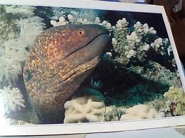 EGITTO  EGYPT  MAR ROSSO FISH  MURENA  STAMP SELO TIMBRE 25 +75 P  GX5589 - Egitto