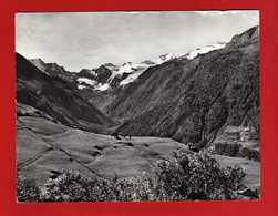 (Riz2) Valle D'Aosta - Cogne - MONTAGNE- MUCCHE Al PASCOLO-. VIAGGIATA 1964. Vedi Descrizione - Italia