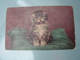 Katze Künstler Ak ..Tucks, Post Card - Künstlerkarten