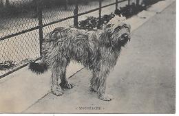 Berger De Brie - Briard - 'Moustache', Dog, Hund, Chien, Perro, Cane - Chiens