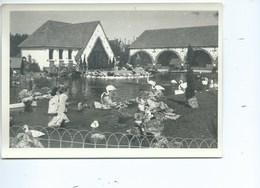 Adinkerke Meli Photo ( 17 Cm / 12 Cm ) + /- Format A5 - De Panne