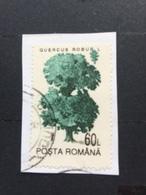 Romania Used 1994 Trees Quercus Robur - 1948-.... Republiken