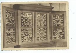 Virton Collège St Joseph Une Des Collections D'entomologie ( Papillon ) - Virton