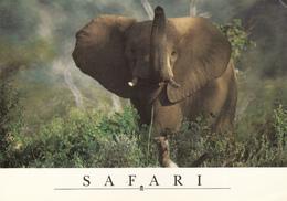 ZAMBIA - Safari - Elephant 2003 - Zambie