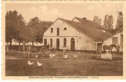 Sint-Truiden / St. Trond : Saffraenberg --- Vlaamsche Legercadettenschool --- Hoeve ( Kippen , Paard,) - Sint-Truiden