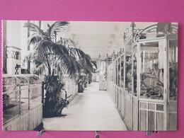 Belgique - Anvers - Jardin Zoologique - Galerie Des Reptiles - Cages Des Serpents Venimeux - Scans Recto-verso - Antwerpen