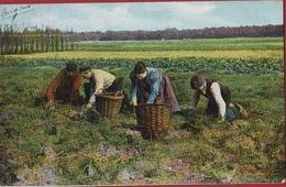 Baarn Bij Utrecht Aardappeloogst Potato Pomme De Terre Oogst Landbouw Agriculture Farm Harvest Recolte - Baarn