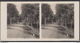 LITHUANIA LITUANIE LITAUEN Old Stereo Photo Card Wood Macadam Near Anuziai (Klaipeda District)  #12445 - Lithuania