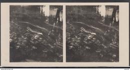 LITHUANIA LITUANIE LITAUEN Old Stereo Photo Card Small River Varne Near Varniai #12477 - Lithuania