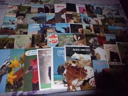 LOT DE 50 CARTES ANIMAUX HUMORISTIQUES ... - Postcards