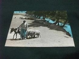 GREGGE PECORE PASTORE CON ASINO LEBANON SHEPHERD UN BERGER LIBANO - Libano