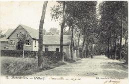 BASSEVELDE - Assenede - Melkerij - Assenede