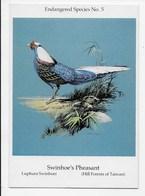 Swinhoe's Pheasant - Birds