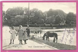 DK165,  * NAERUM Ved GADEKÆRET * BATHING CHILDREN  With HORSE  * SENT 1906 - Dänemark