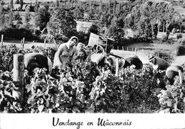 Vendange Vendanges En Mâconnais Vin Moisy - France