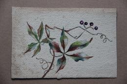 Aquarelle, Vigne Vierge - Watercolours