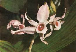 Lote PEP1093, Colombia,  Postal, Postcard, Orchid, Not Perfect Card, Orquidea, Dendrobium Mobile, 10016 - Colombia