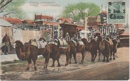 AK Peking 北京 北京市 Lastkamele Kamel Camel Caravan China Chine 中华人民共和国 Briefmarke Timbre Stamp Deutsches Reich 2 Cents - Cina
