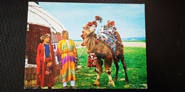 AFGHANISTAN TURKOMAN CAMEL Old Postcard - Afghanistan