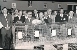 MERELBEKE   FOTO 1973  -  13 X 9 CM -   TENTOONSTELLING RASKONIJNEN - Merelbeke
