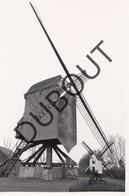 Meerhout Molen/Moulin Originele Foto C19 - Meerhout