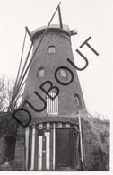 Rijkevorsel Molen/Moulin Originele Foto C21 - Rijkevorsel