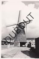Molenbeersel Kinrooi Molen/Moulin Originele Foto C9 - Kinrooi