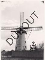 Molenbeersel Kinrooi Molen/Moulin Originele Foto C10 - Kinrooi