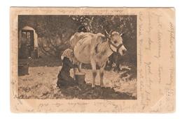 The White Cow Julien Dupre Artist Vintage UDB 1905 Postcard Flag Cancel - Malerei & Gemälde