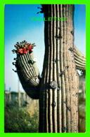 CACTUS - SAGUARRO CACTUS ( CEREUS GIGANTES) -FREELANCE PRODUCTS CO - - Cactus