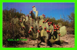 CACTUS - PRICKLEY PEAR FRUIT - FREELANCE PRODUCTS CO - - Cactus
