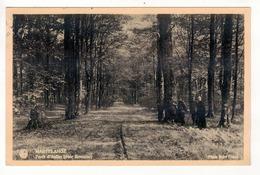 MARTELANGE - Forêt D' Anlier (voie Romaine). - Martelange
