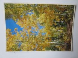 Sous Bois 219. Photo John Wagner. Cartolaser G-291 Postmarked 1986. QUAKING ASPEN FALL MILLCREEK CANYON UTAH - Non Classés