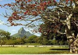 MAURITIUS ILE MAURICE Montagne Du Rempart 806m RV Beau Timbre Oiseau - Mauritius
