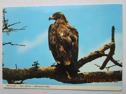 Cp Afrique  KENYA  -  Oiseaux AIGLE AFRICAIN , African Eagle , Afrikanischer  Adler , écrite  Et Timbre Tourmaline - Kenya