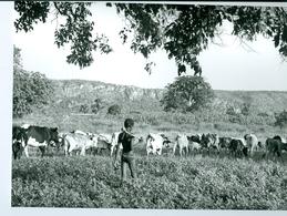 Photo Bénin. Petit Berger Peul De L'Atakora 1980. Photo Du Père Gust Beeckmans. - Africa